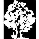 Maulbeerbaum